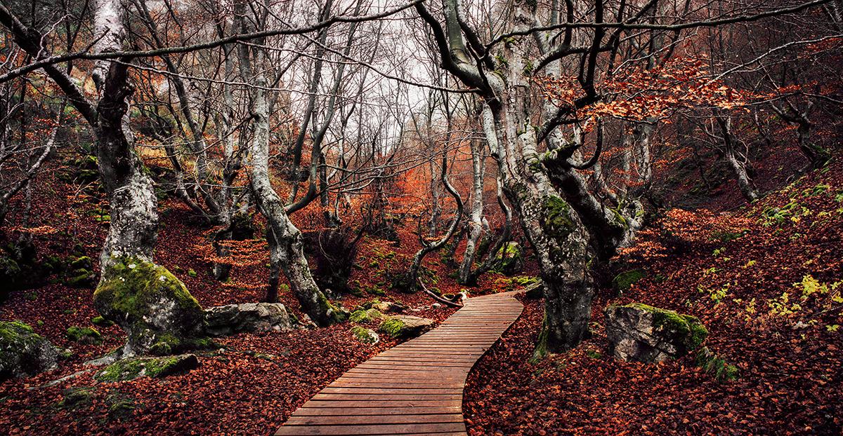 Forest by Borja Reyes