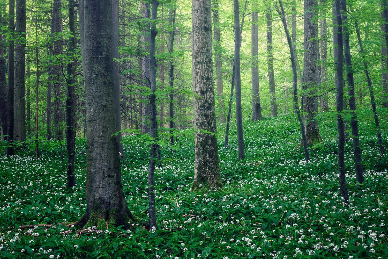 Breathing woodland by Lionel Fellay