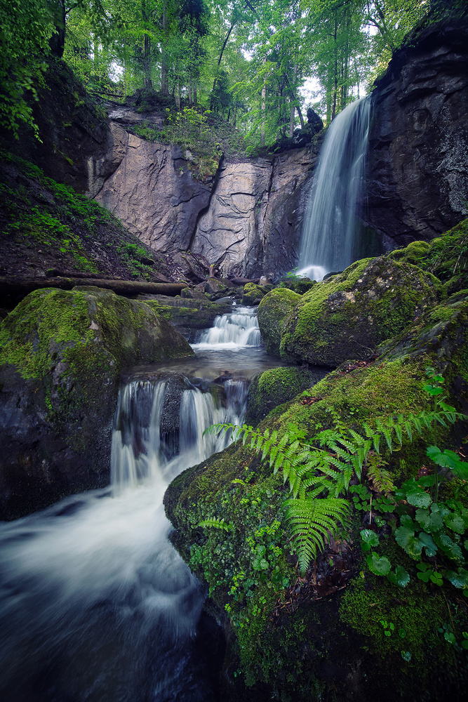 Swiss jungle by Lionel Fellay