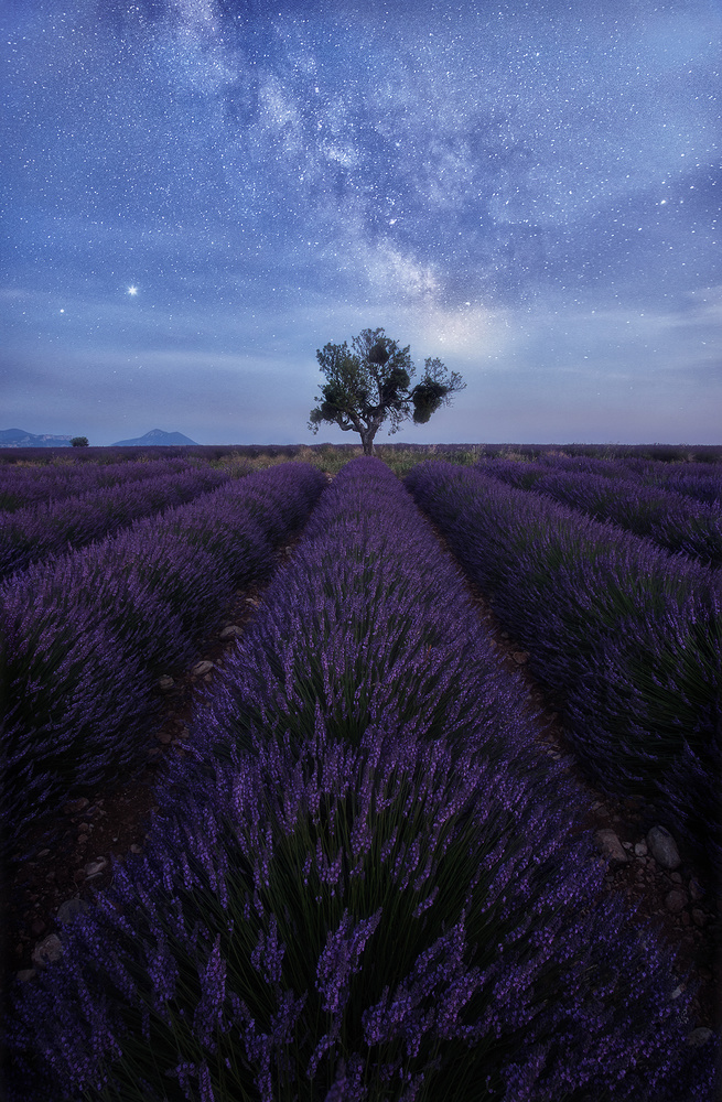 Starry lavenders by Lionel Fellay