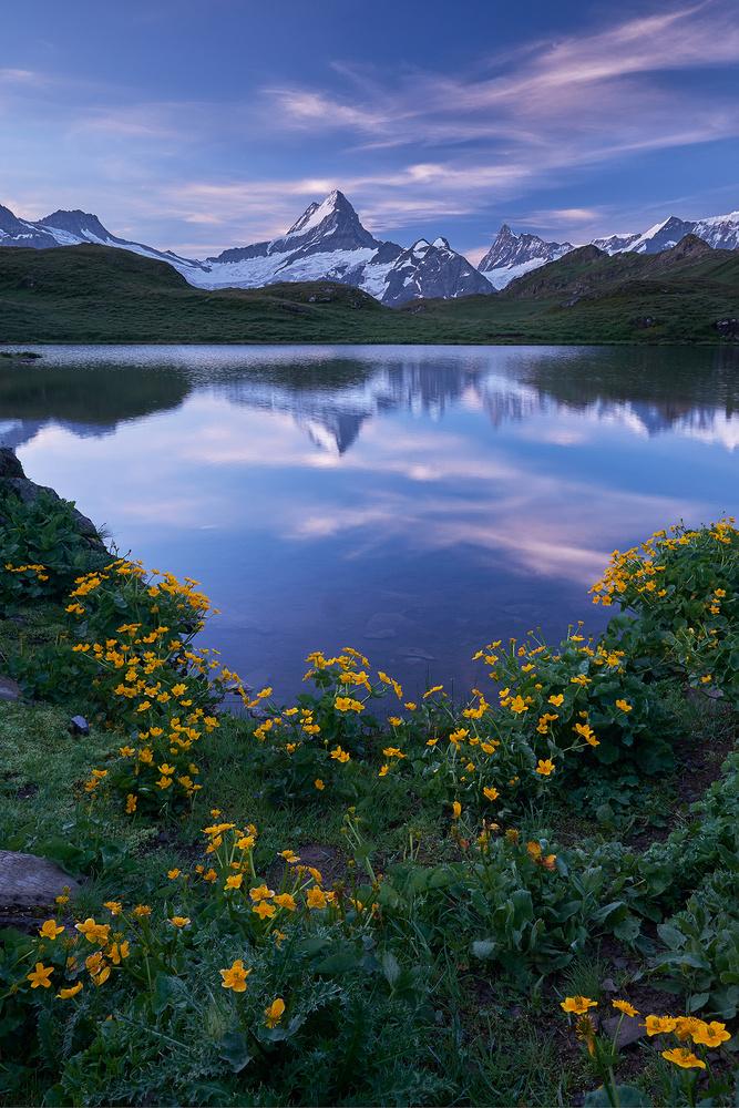 Morning Glory by Lionel Fellay
