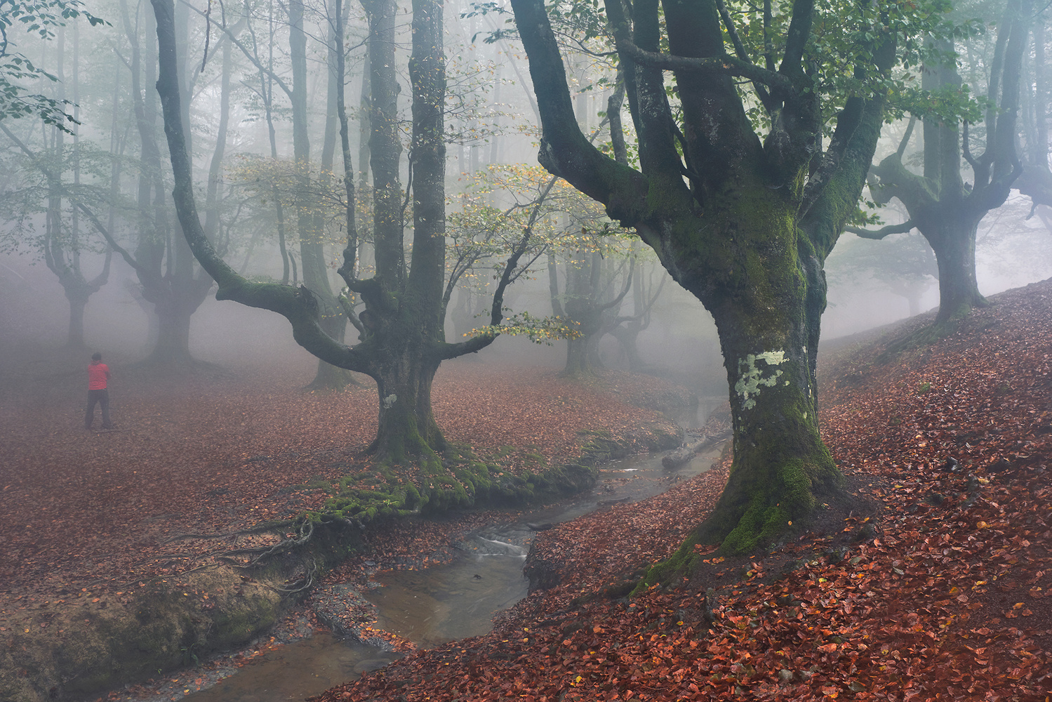Magical forests of Bizkaia by Lionel Fellay