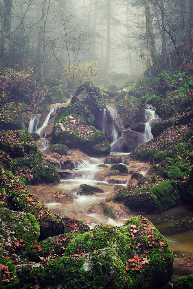 Echanted forest by Lionel Fellay