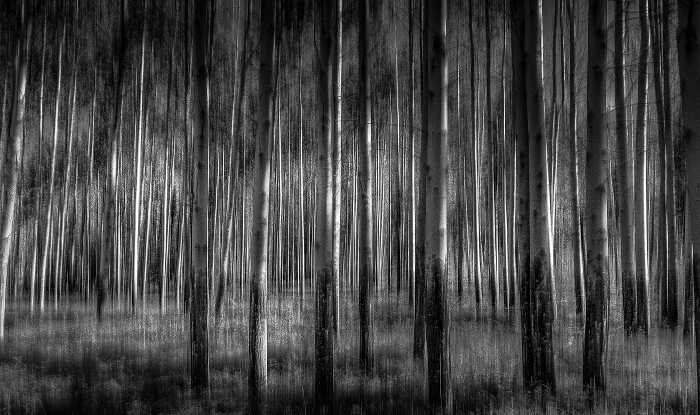 Moonlight Forest by Eckhardt Kriel
