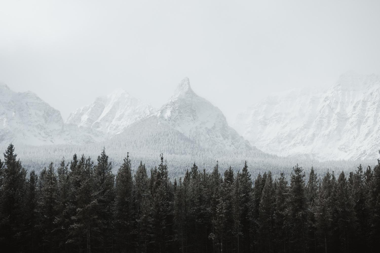 Assiniboine by Eric Shiozaki