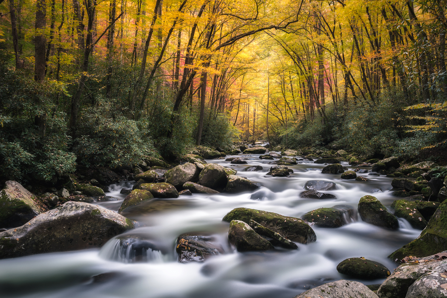 Gentle Forest Creek by Josh Tullock