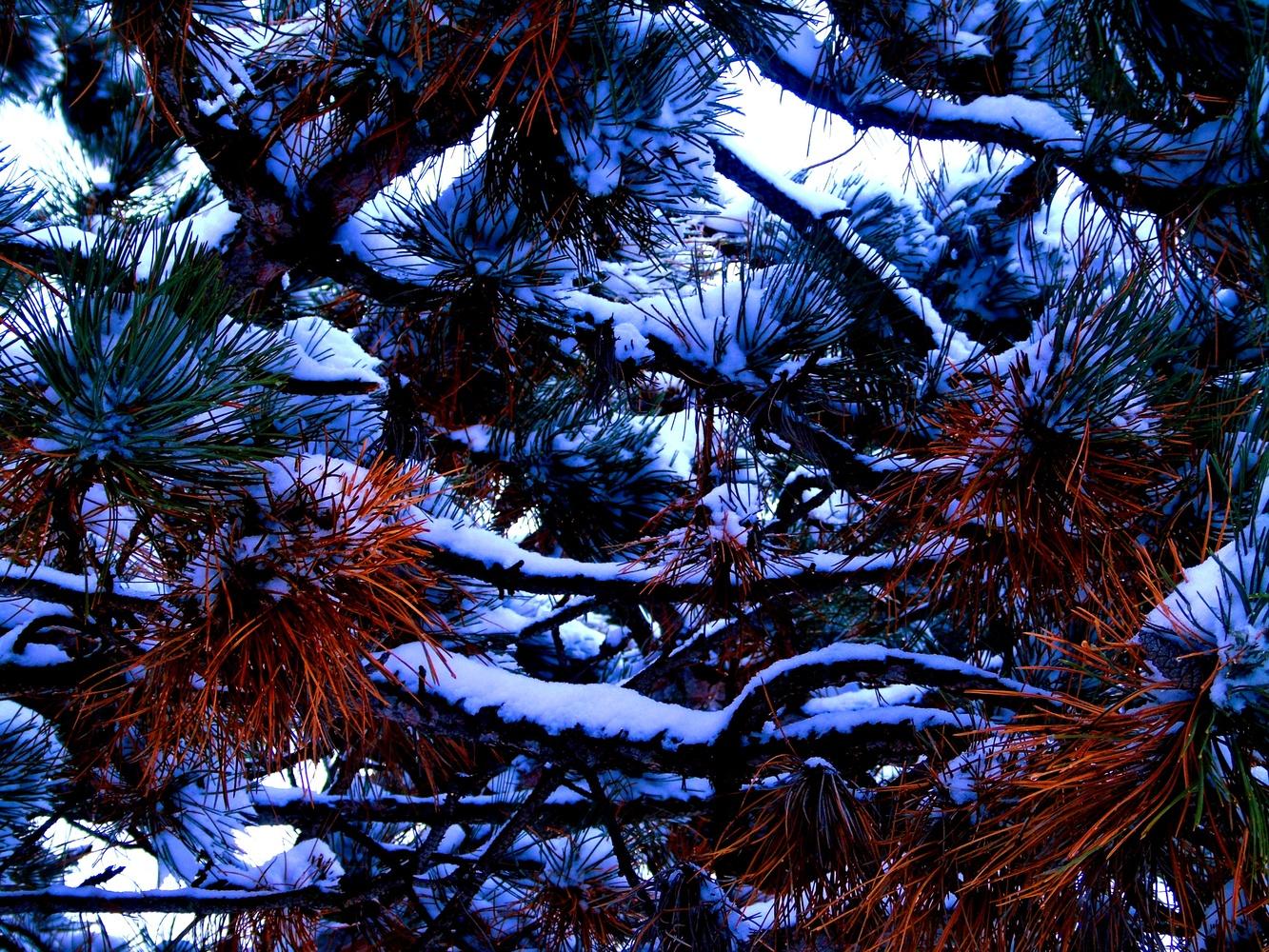 Winter's Day by Gail Jordan
