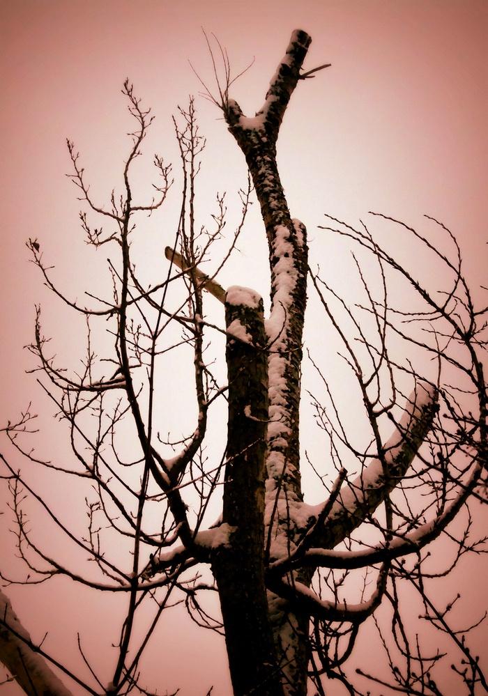 Winter by Gail Jordan