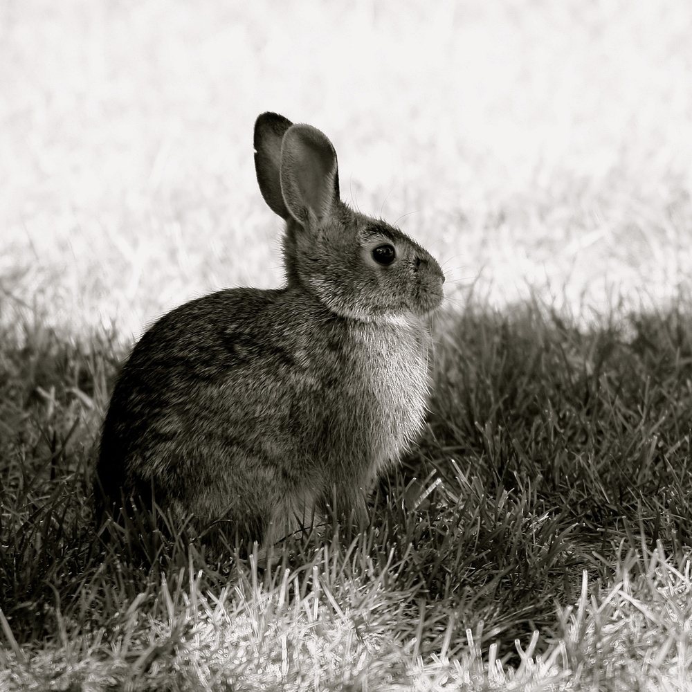 Das bunny by Gregg Hoag