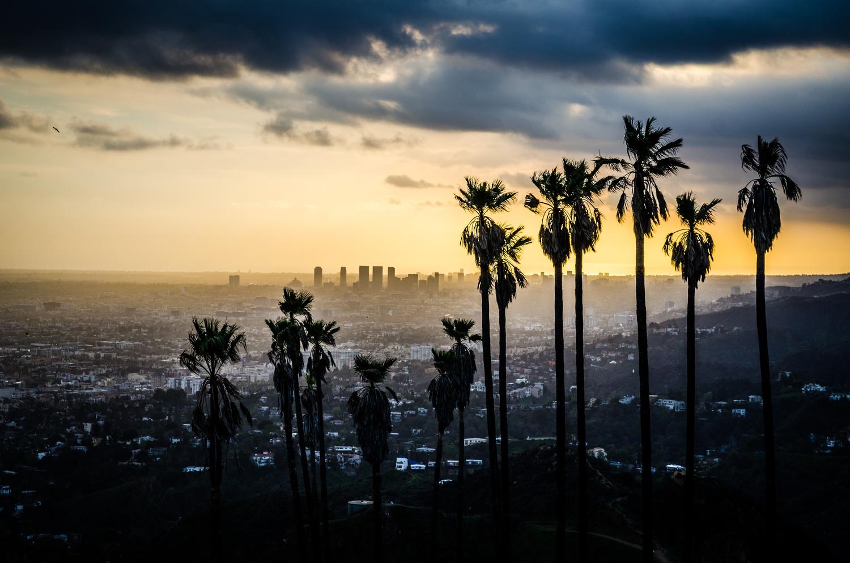 Hollywood Palms by Paul Kowalski