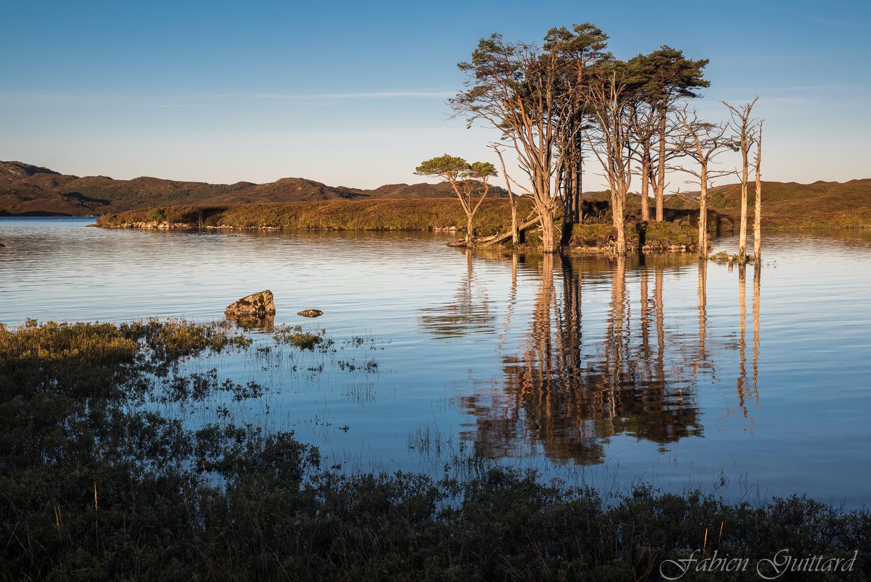 Scots pines on Loch Assynt, Scottish Highlands by Fabien Guittard