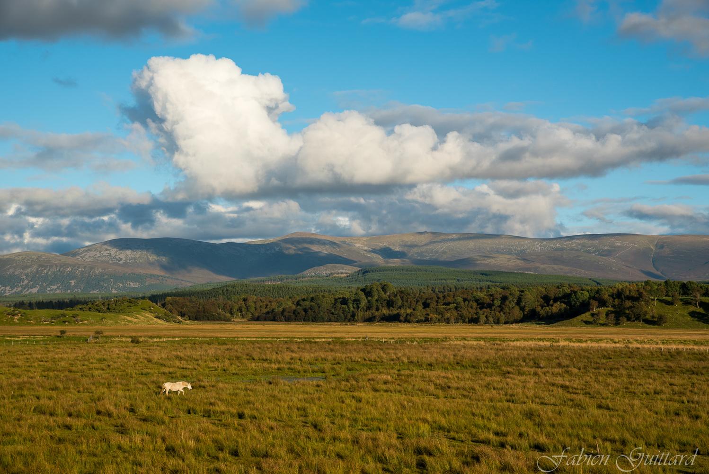 Horse near Kingussie, Scottish Highlands by Fabien Guittard