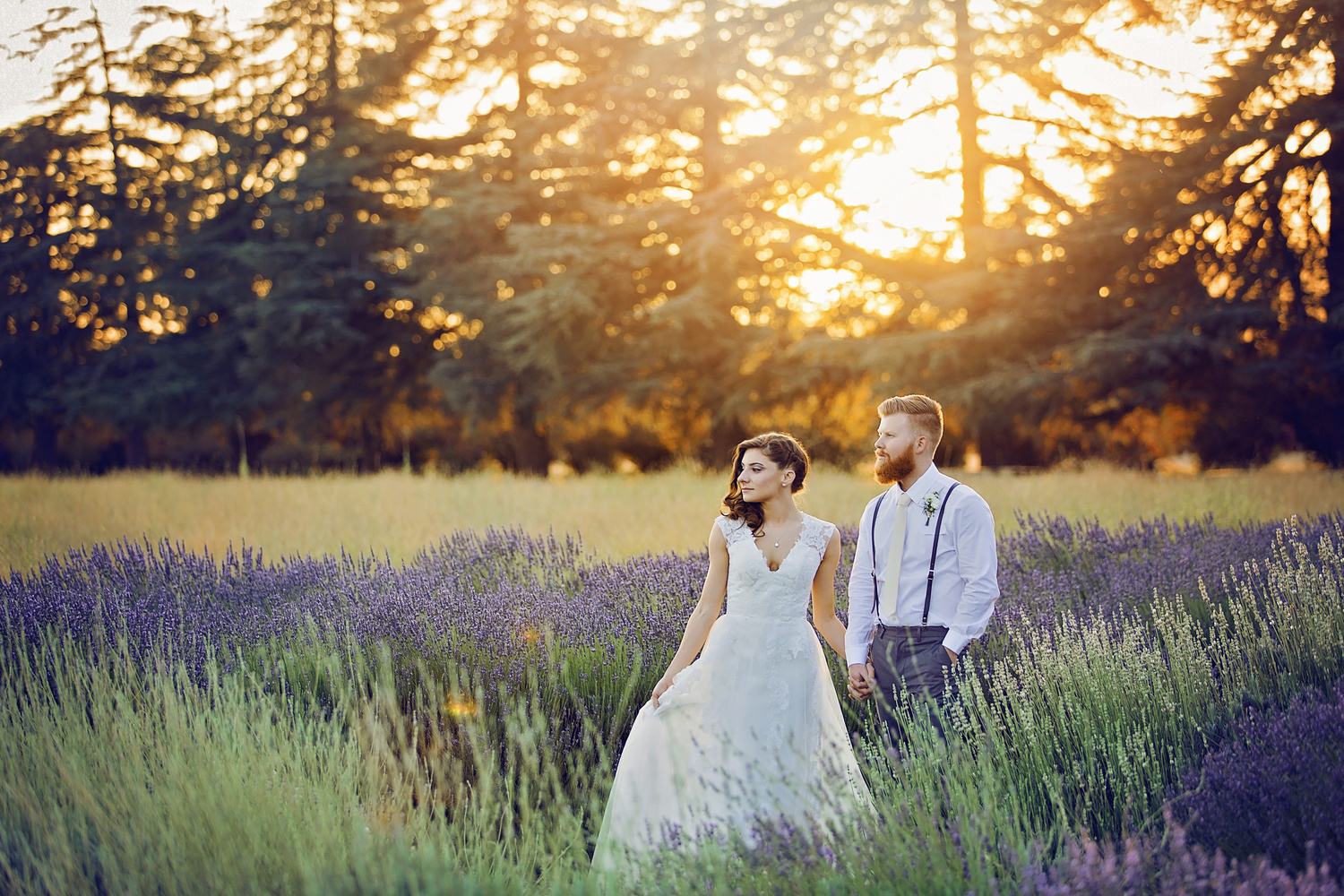 Lavender Love by Matthew Reiter