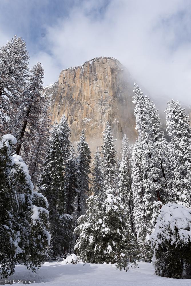 Embraced   Yosemite National Park, CA, USA by Ida Gamban