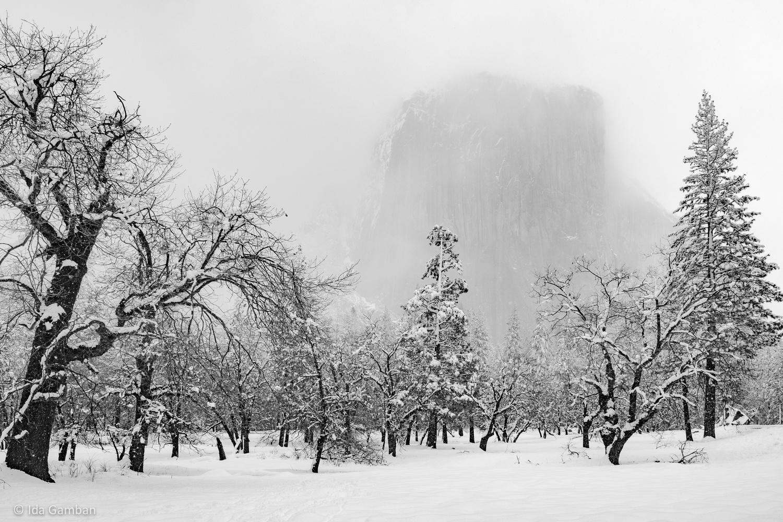 Spirit   Yosemite National Park, CA by Ida Gamban