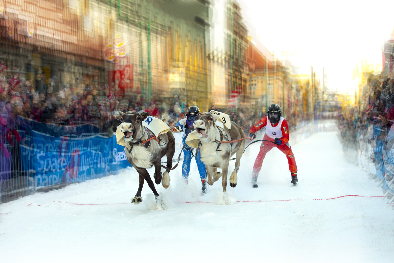 The reindeer race by Zoltan Tot