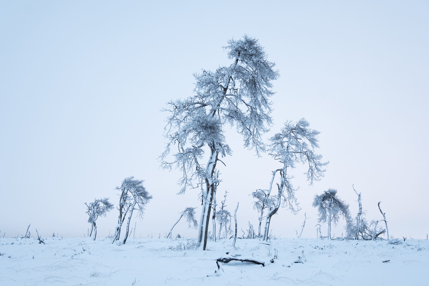 A band of trees by Andu Stan