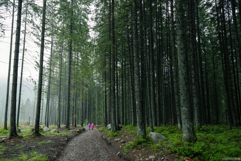 forest. by Oleksandr Gontar