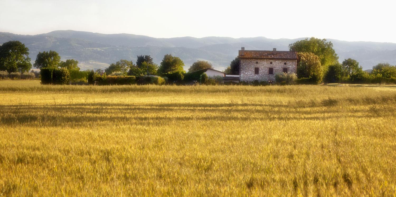 Wheatfields by Susan Kessler