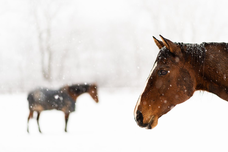 First Snow by Luke Fattorini