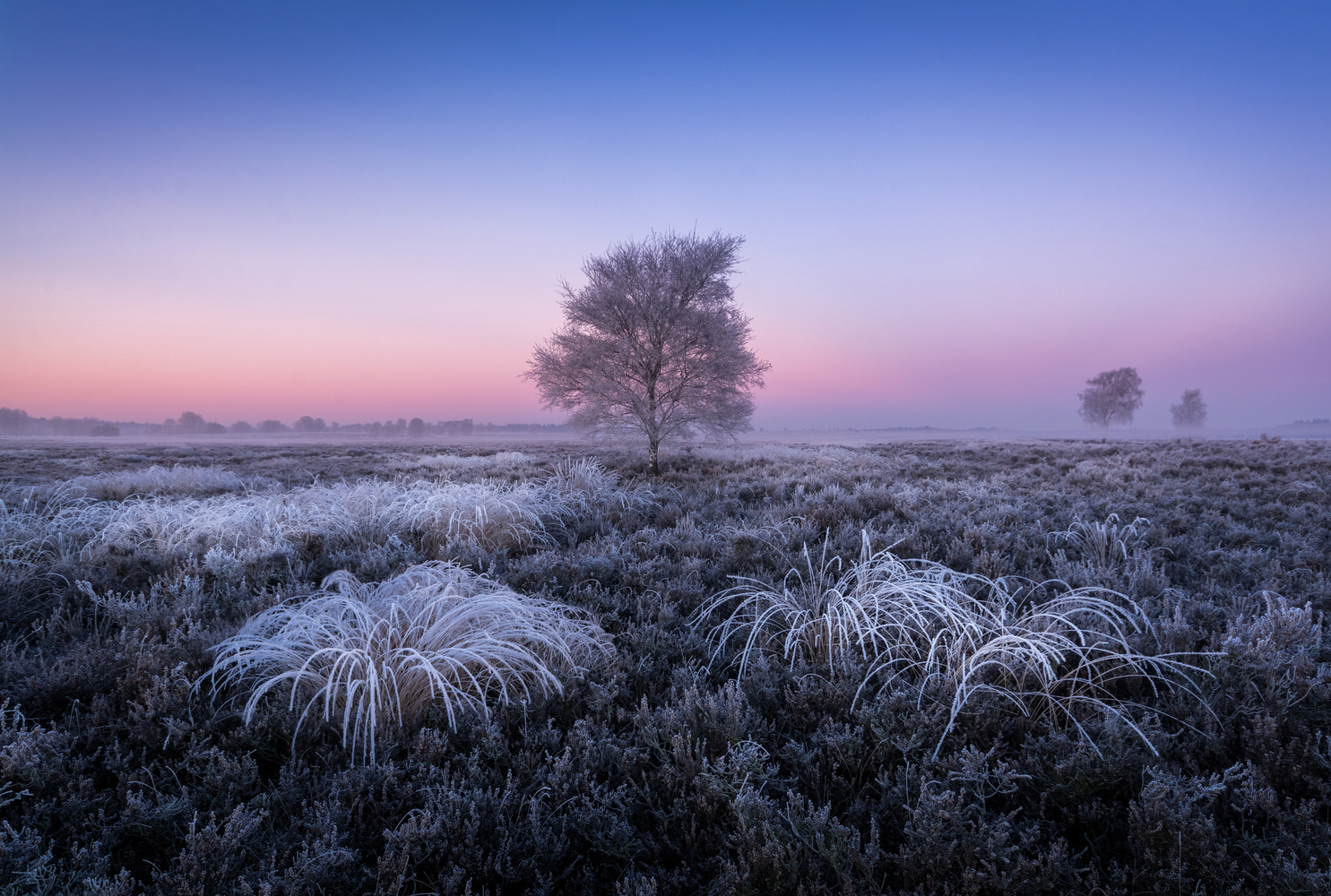 Frozen by Mario Visser