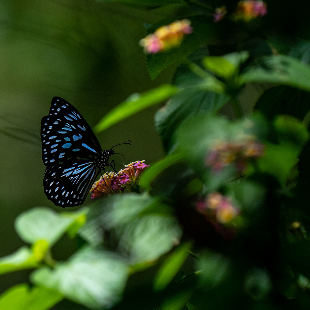 Butterfly by Maurice Waters