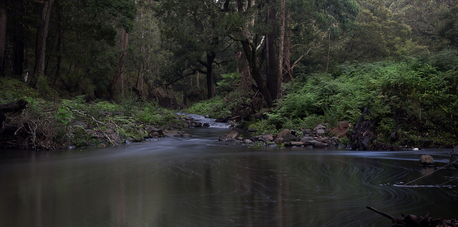 Goomburra Forest Retreat - Creek by Maurice Waters