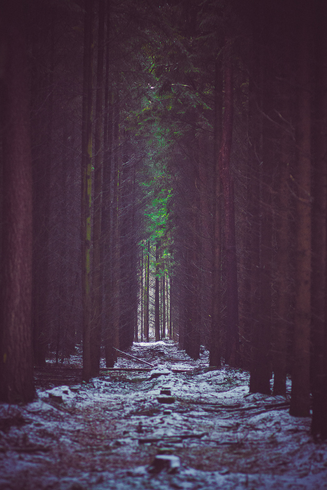 into the forest by Royan Descartes