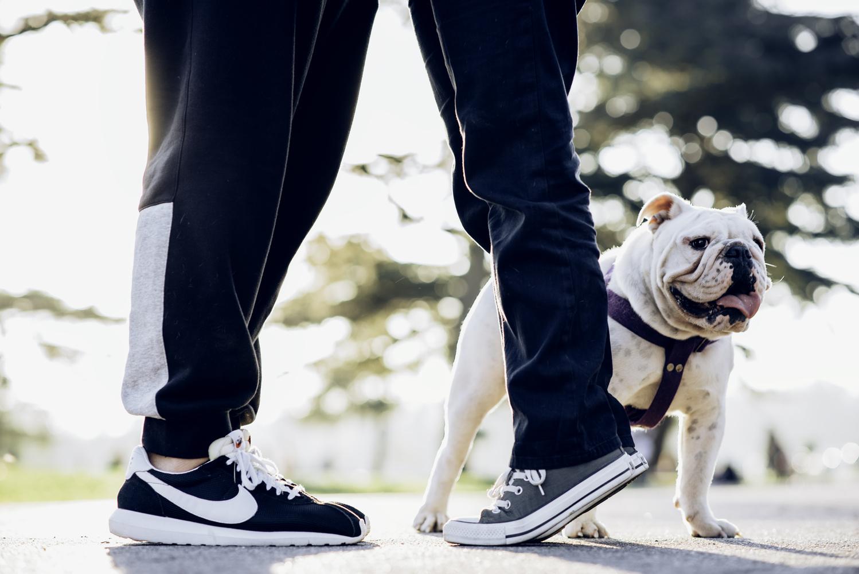 Prewedding with bulldog by Alejandro Santarelli