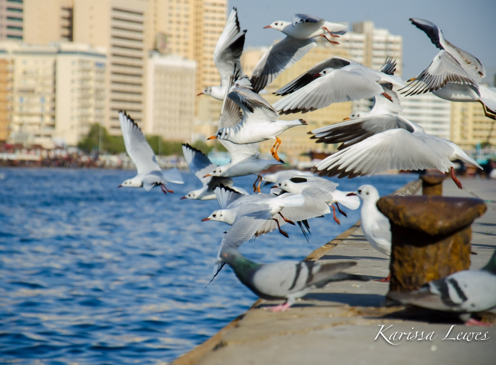 Take Flight by Karissa Lewes