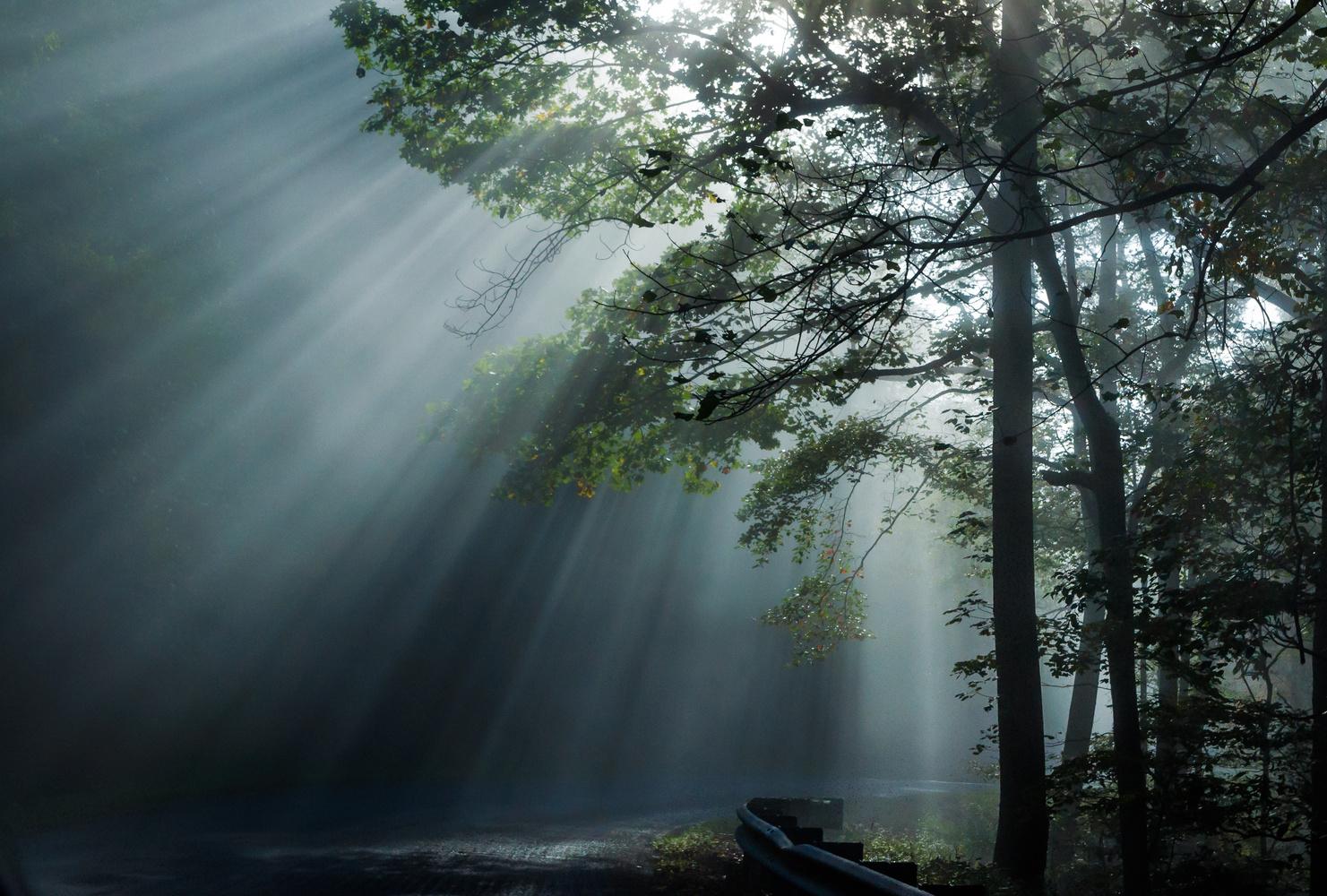 Into the Light by John Crisp