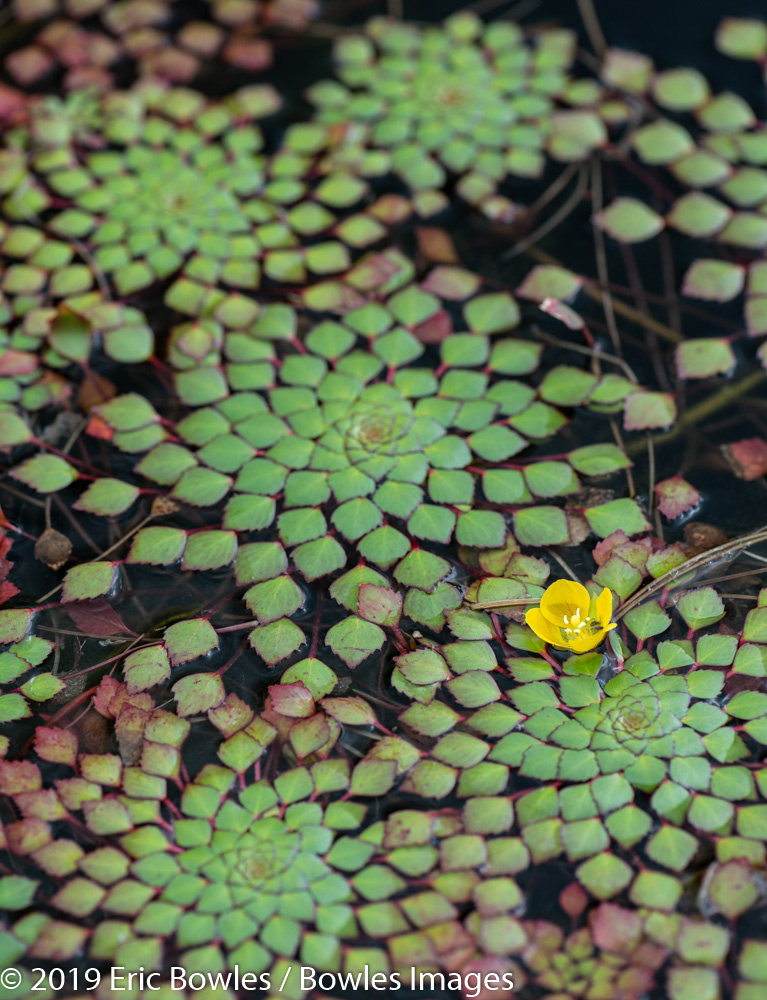 Patterns with water Plants by Eric Bowles