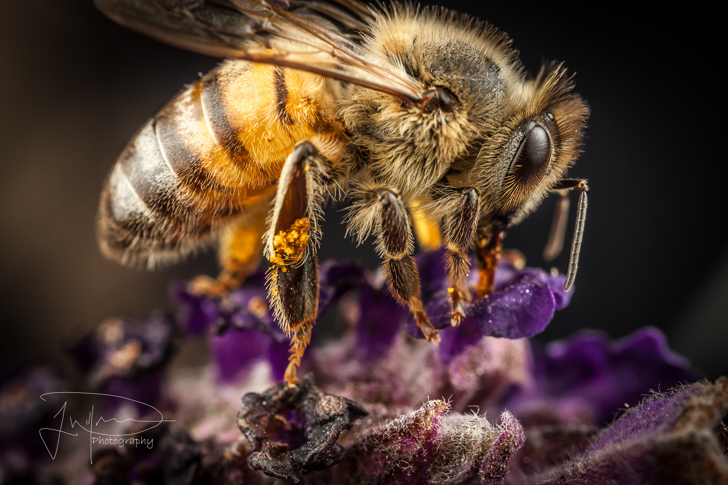 Bee on a Lavender  by Jonathan Willner