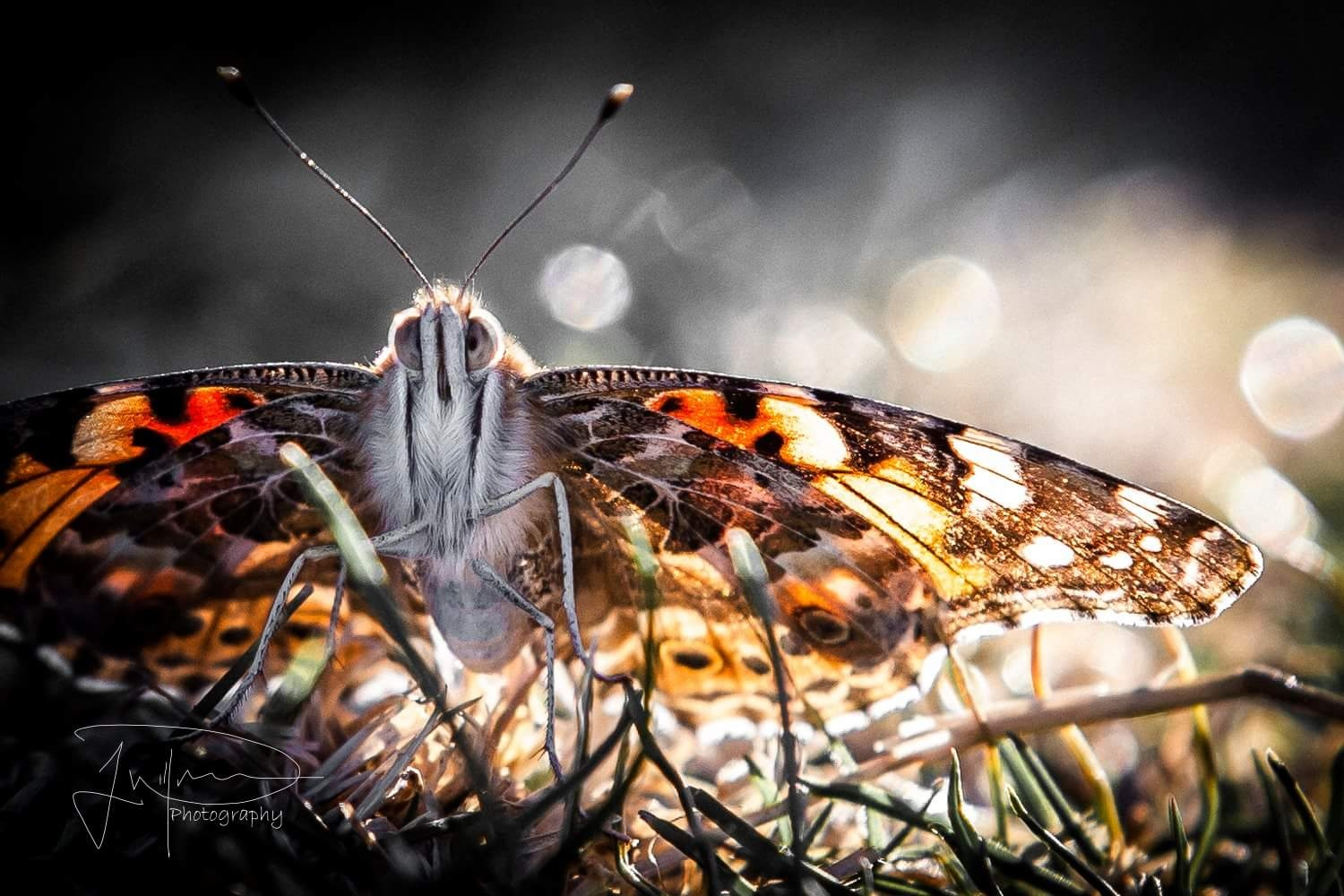 Butterfly at the park  by Jonathan Willner