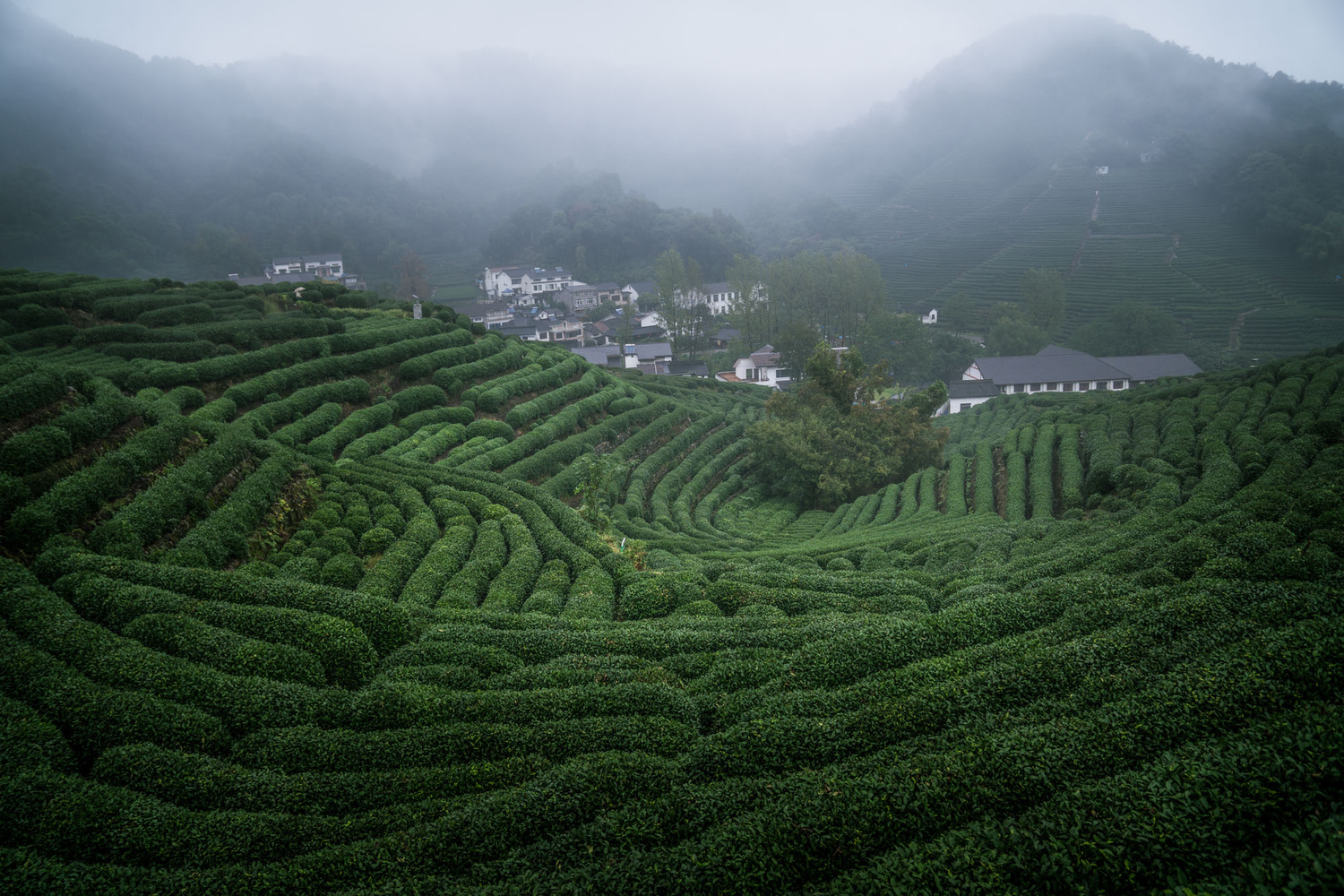 Rice terraces in China by Pavel Dvorak