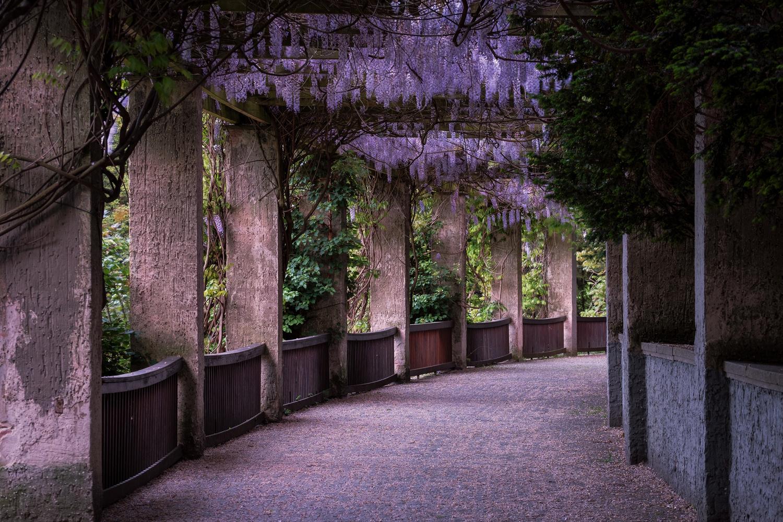 Fairytale grove by Alexander Meier