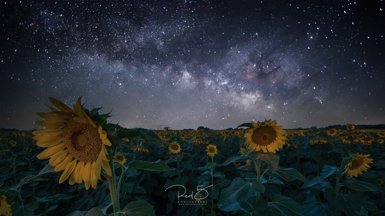 Sunflowers at Night by Jason Squyres