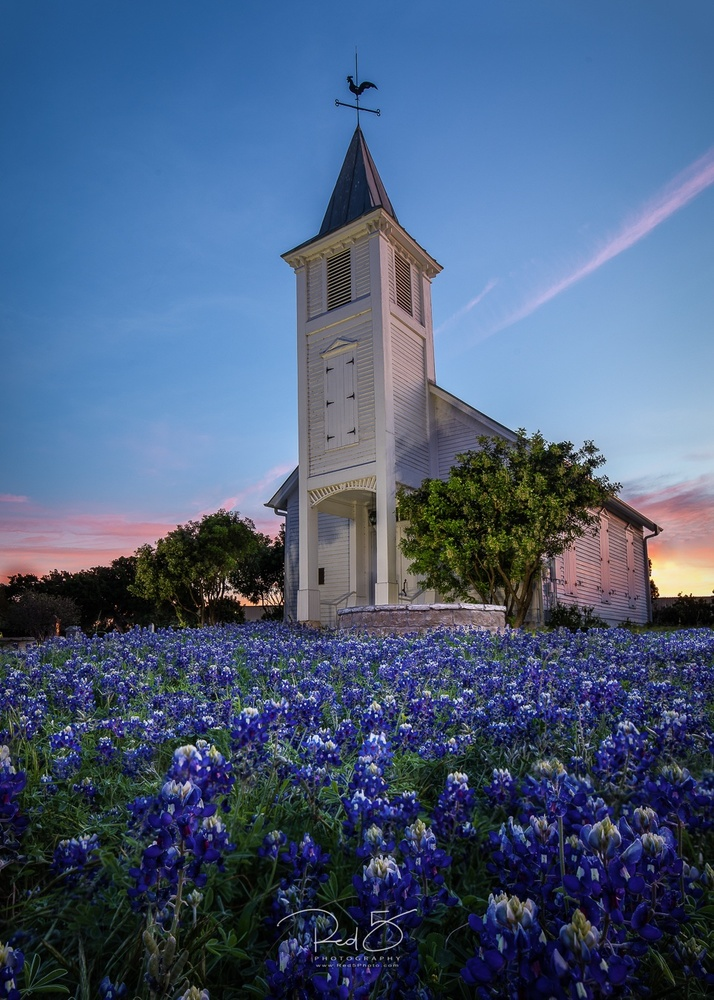 Worshiping Bluebonnets  by Jason Squyres