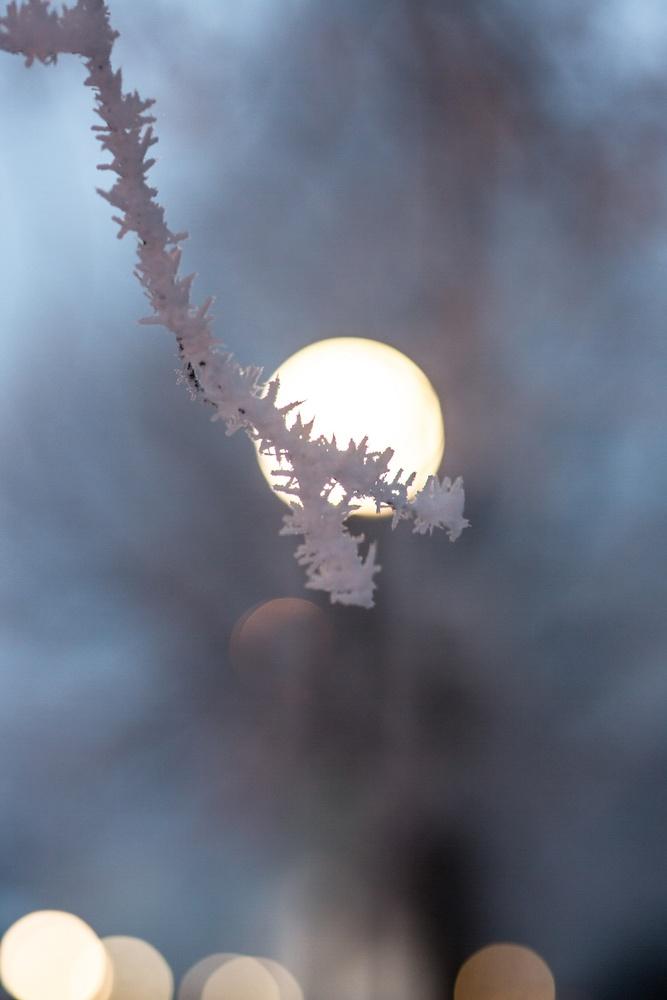 Hoar frost by Matthew Potter