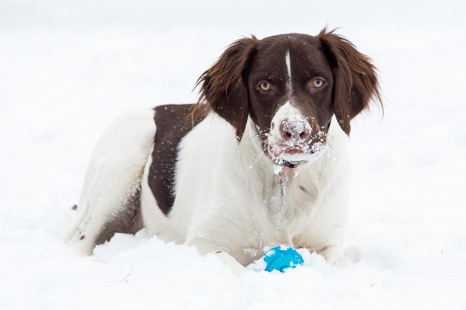 Snow Break by Robert Lee