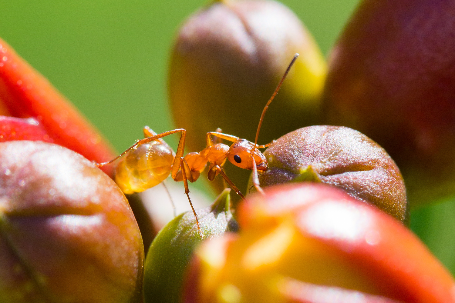 Ant on a Trumpet by Robert Lee