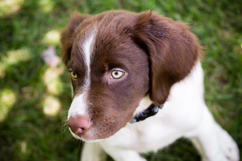 Puppy Eyes by Robert Lee