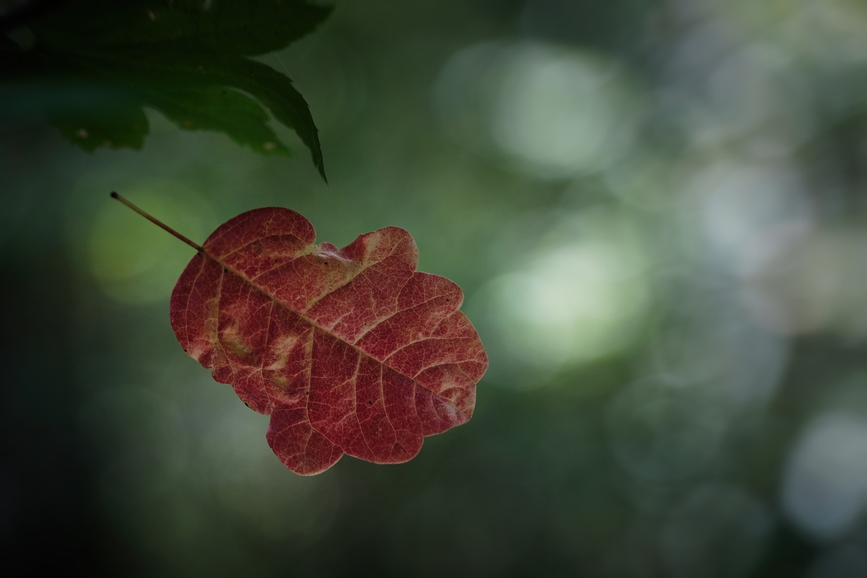 Poison Ivy by Nivaun Rahne