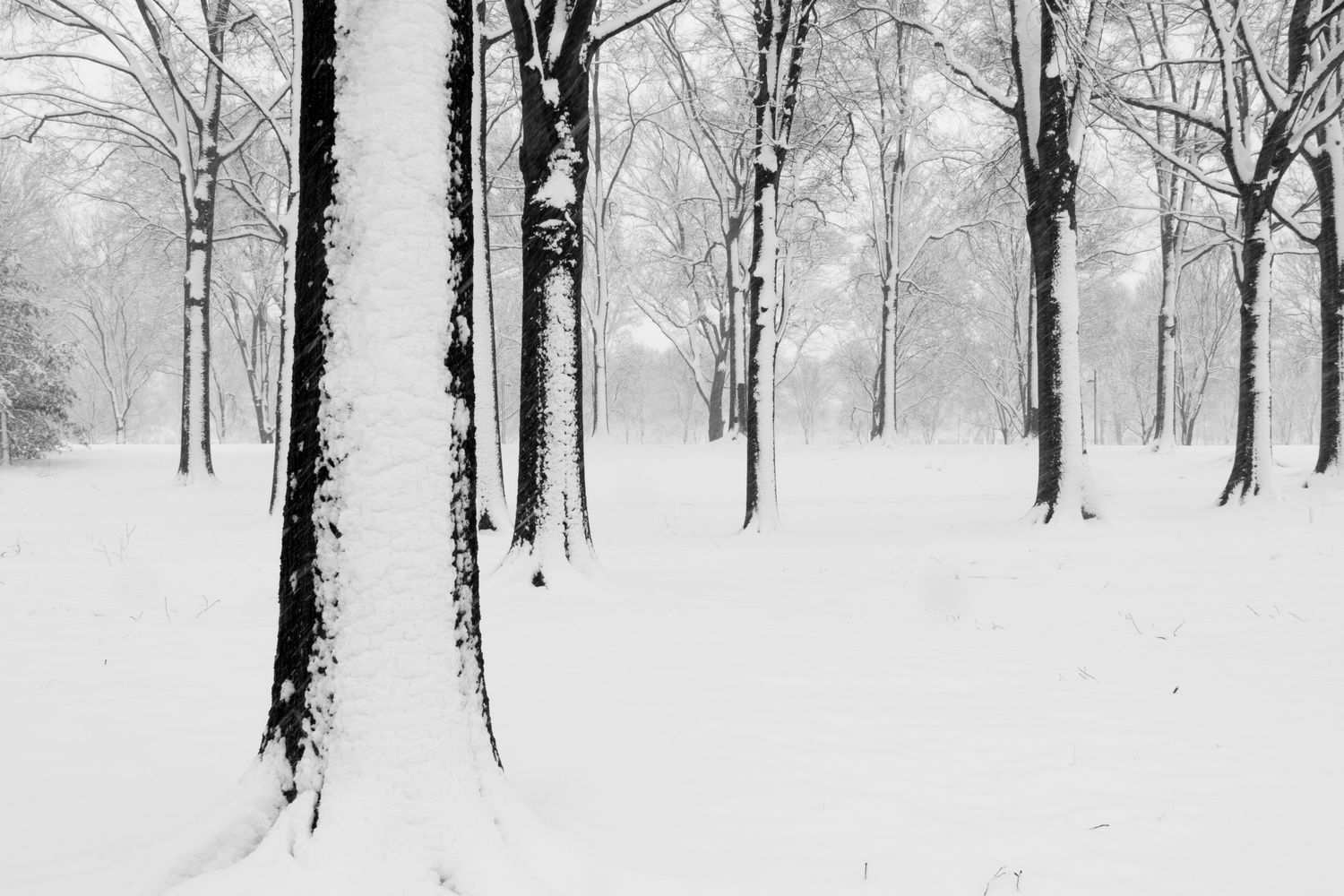 Trees on the Washington DC Mall in a snow storm by Paul FIlios