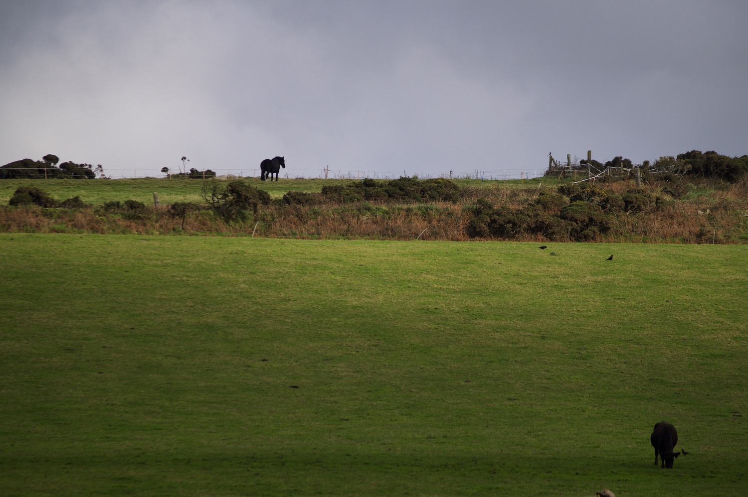 Horse on a hill by Sandra Spencer