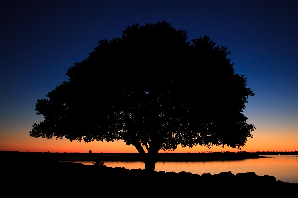 Sunny Silhouette by Neon Howe