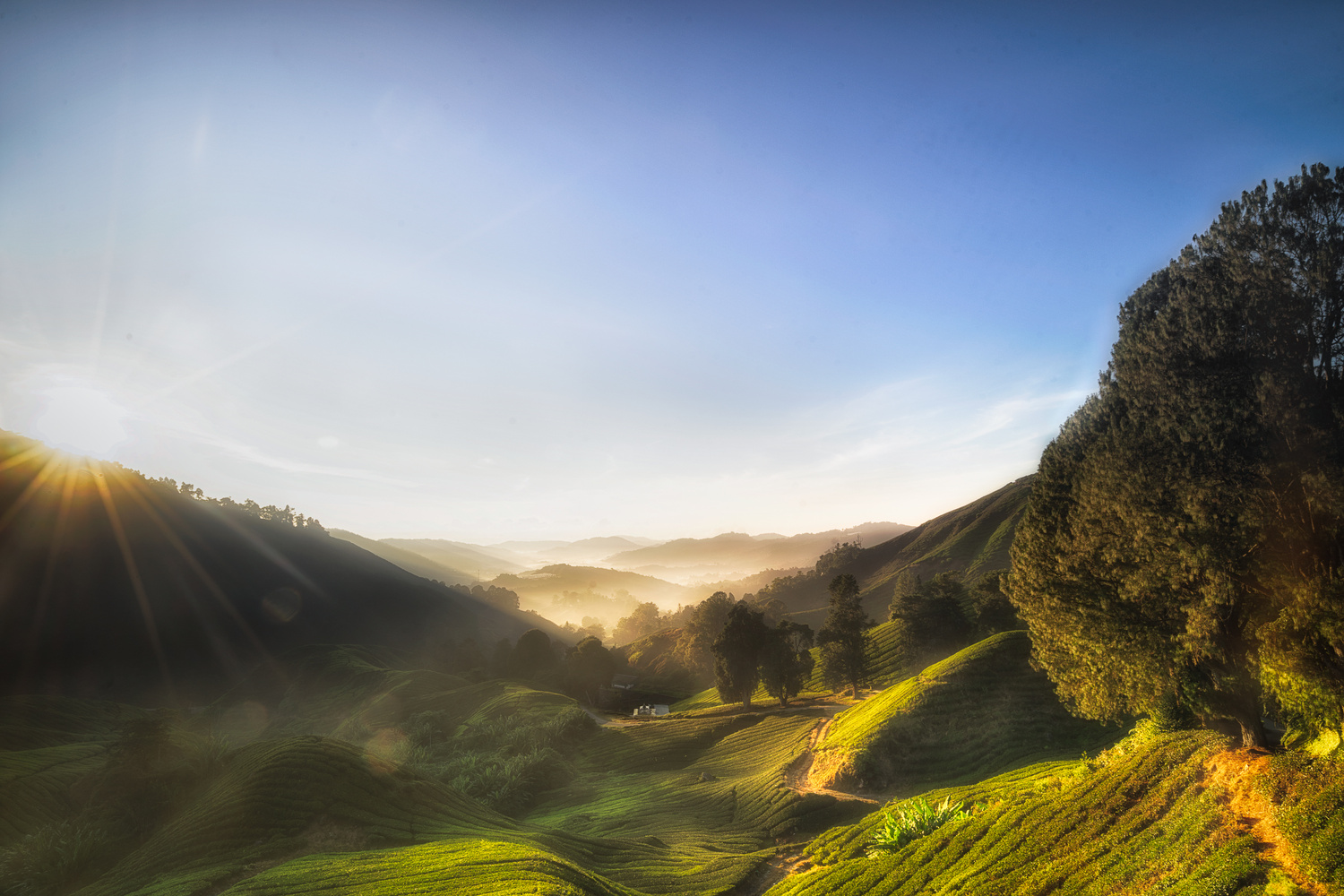 Cameron Highland Sunrise by James Tai