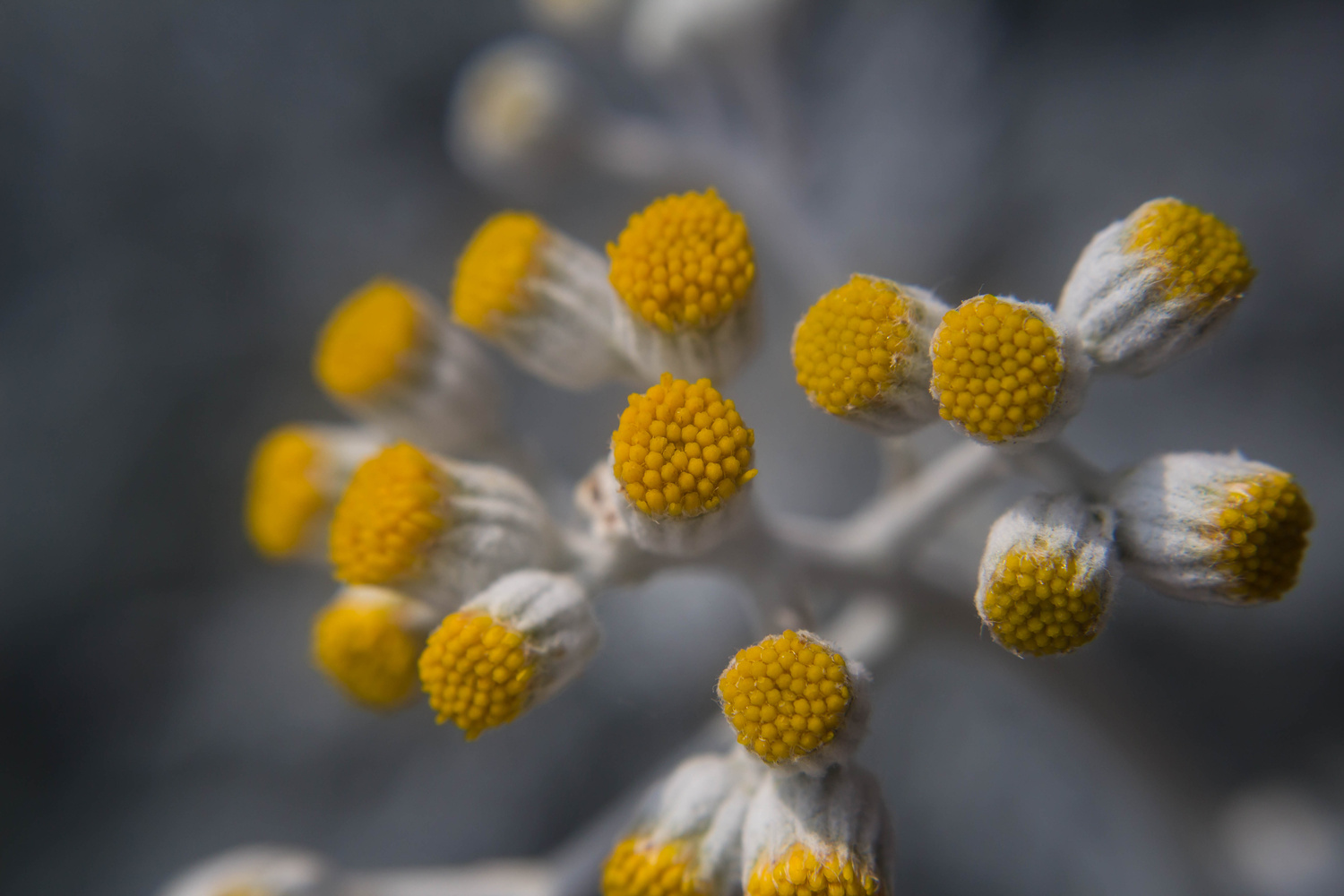 Flowers by Andrew Smith