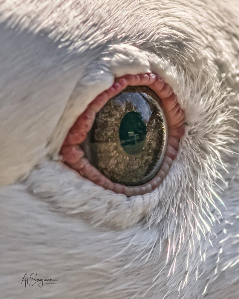 Eye See by Al Szajman