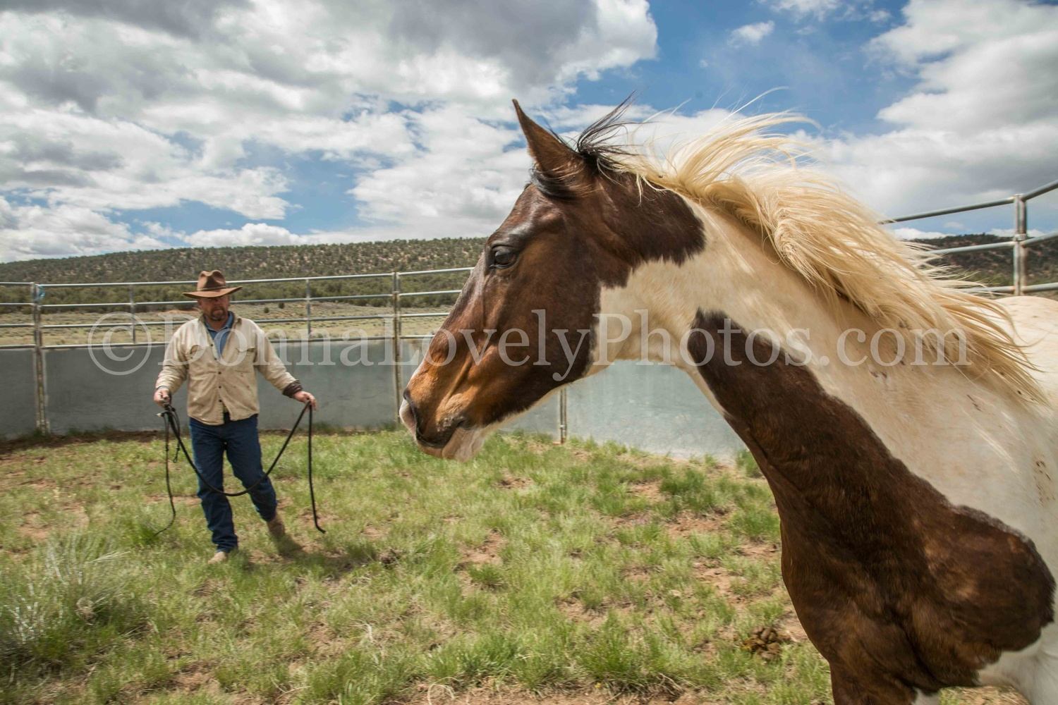 Horse Whisperer and Mustang by Donna Lovely